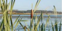 Wetlands reduce flood risks in Aarhus