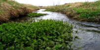 Watercourses divert urban water and create natural areas